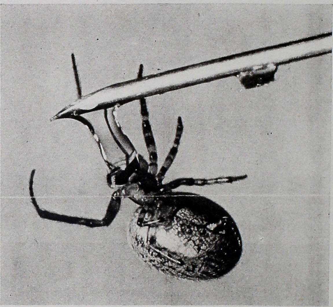 1954-LIFE-Spiders-Spin-7