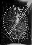DIE WIRKUNG AKUTER UND CHRONISCHER KOHLENOXYD&#8230;<br><strong>Archives Internationales DE Pharmacodynamie et de Thérapie</strong>