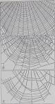 Spider-Web Building<br><strong>Reprinted from Science</strong>