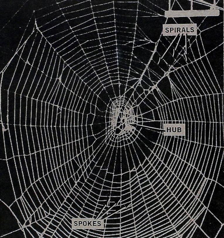 1967-The-Spiders-Web-1