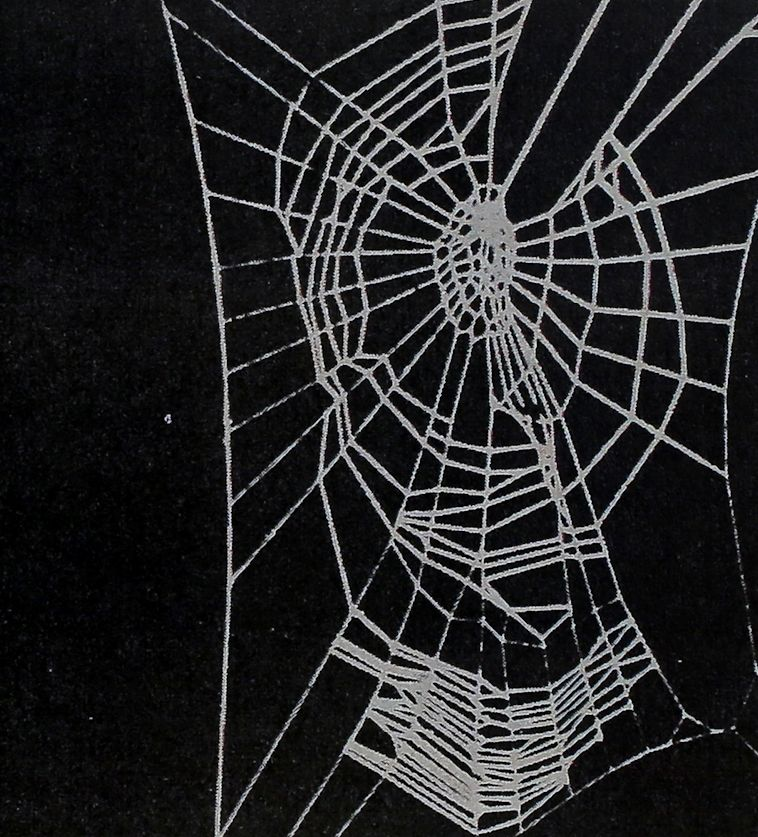 The Spider's Web – Research Tool<br><strong>Senior Science</strong>