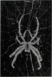 Spiders Help Men to Cope With Space<br><strong>News & Observer</strong>