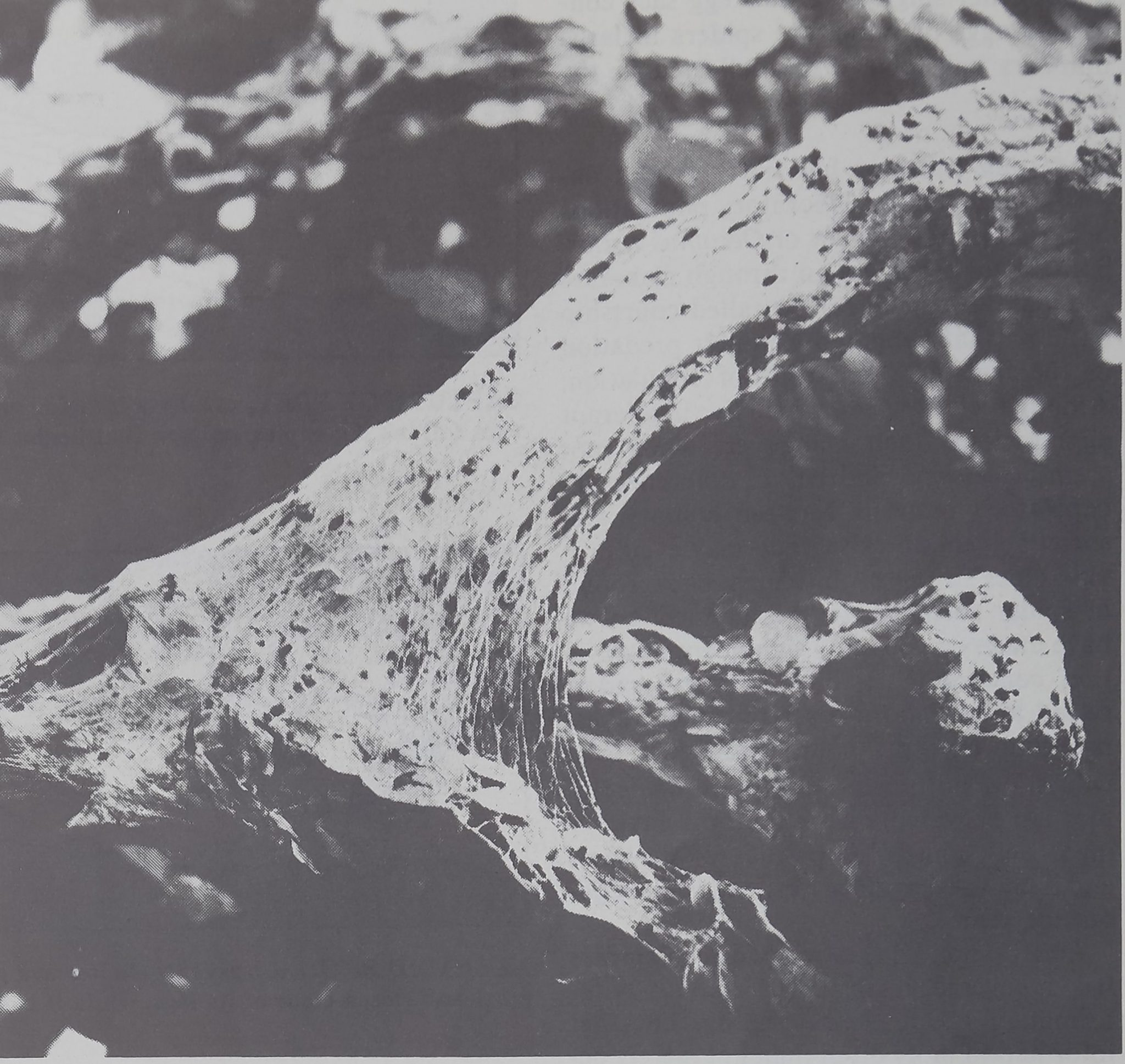 1976-ScientificAmerican-11