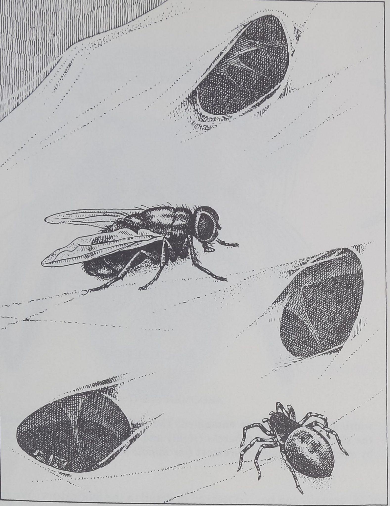 1976-ScientificAmerican-9