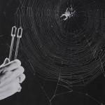 Peter N Witt - Spider Communication