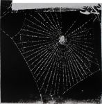 Eine Spinne Wird Schizophren