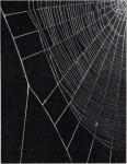 Die Wirkung von Substanzen auf den Netzbau der Spinnen<br><strong>EXPERIENTIA</strong>