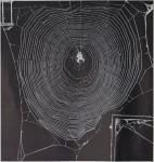 Spinnennetze: Plan und Baukunst <BR><strong> NATURWISSENSCHAFTLICHE RUNDSHCAU</strong>