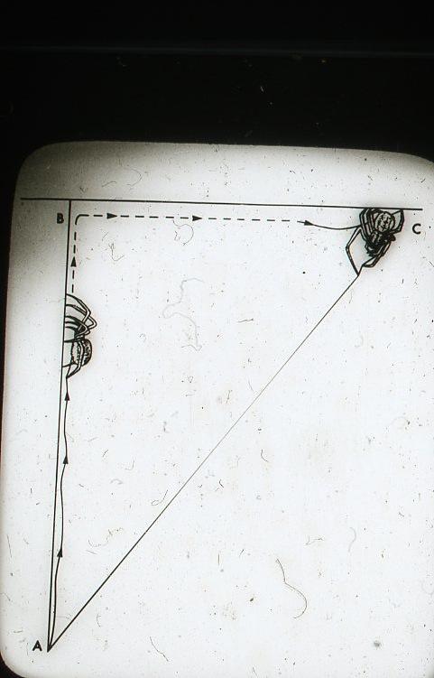 Dr. Peter N Witt - Web Gallery -