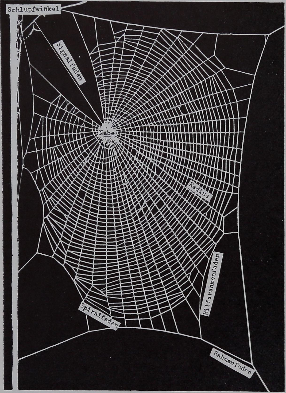 1954-Ein-Biologischer-2