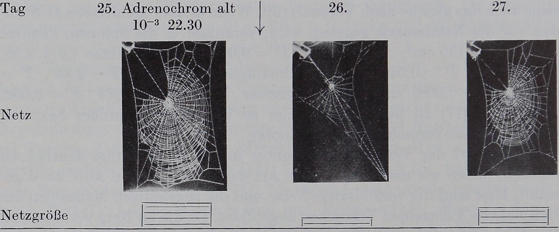 1954-Ein-Biologischer-5