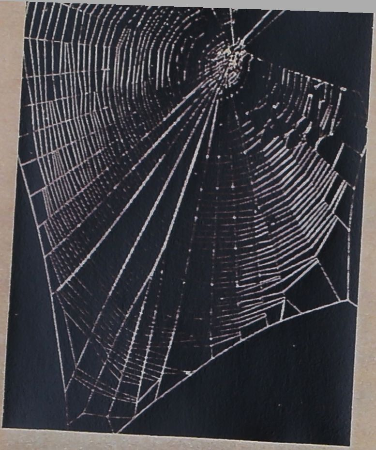 1954-LIFE-Spiders-Spin-1