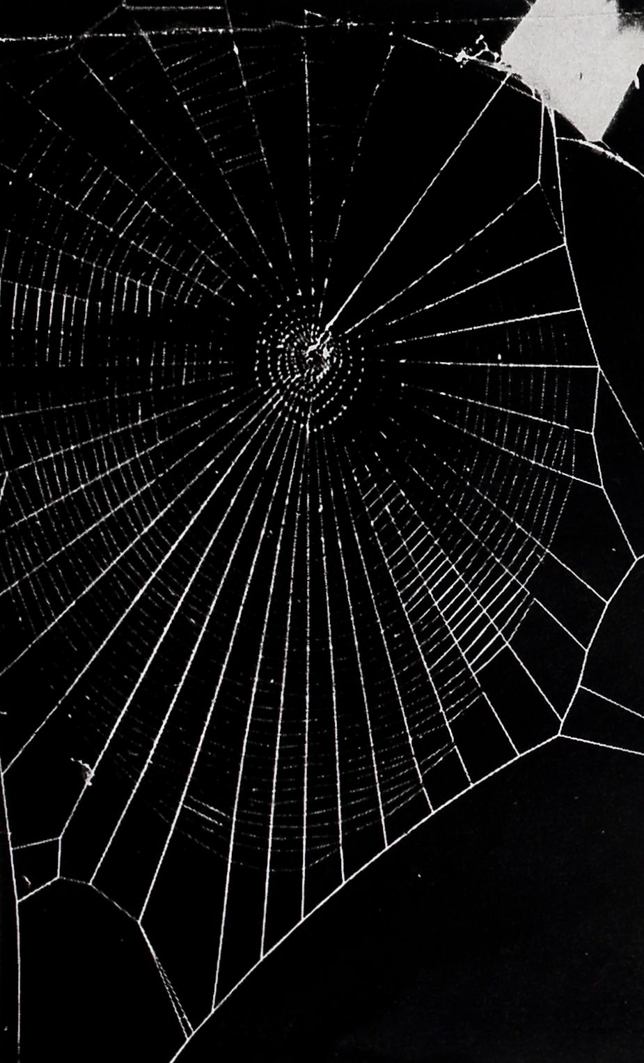 1954-LIFE-Spiders-Spin-11