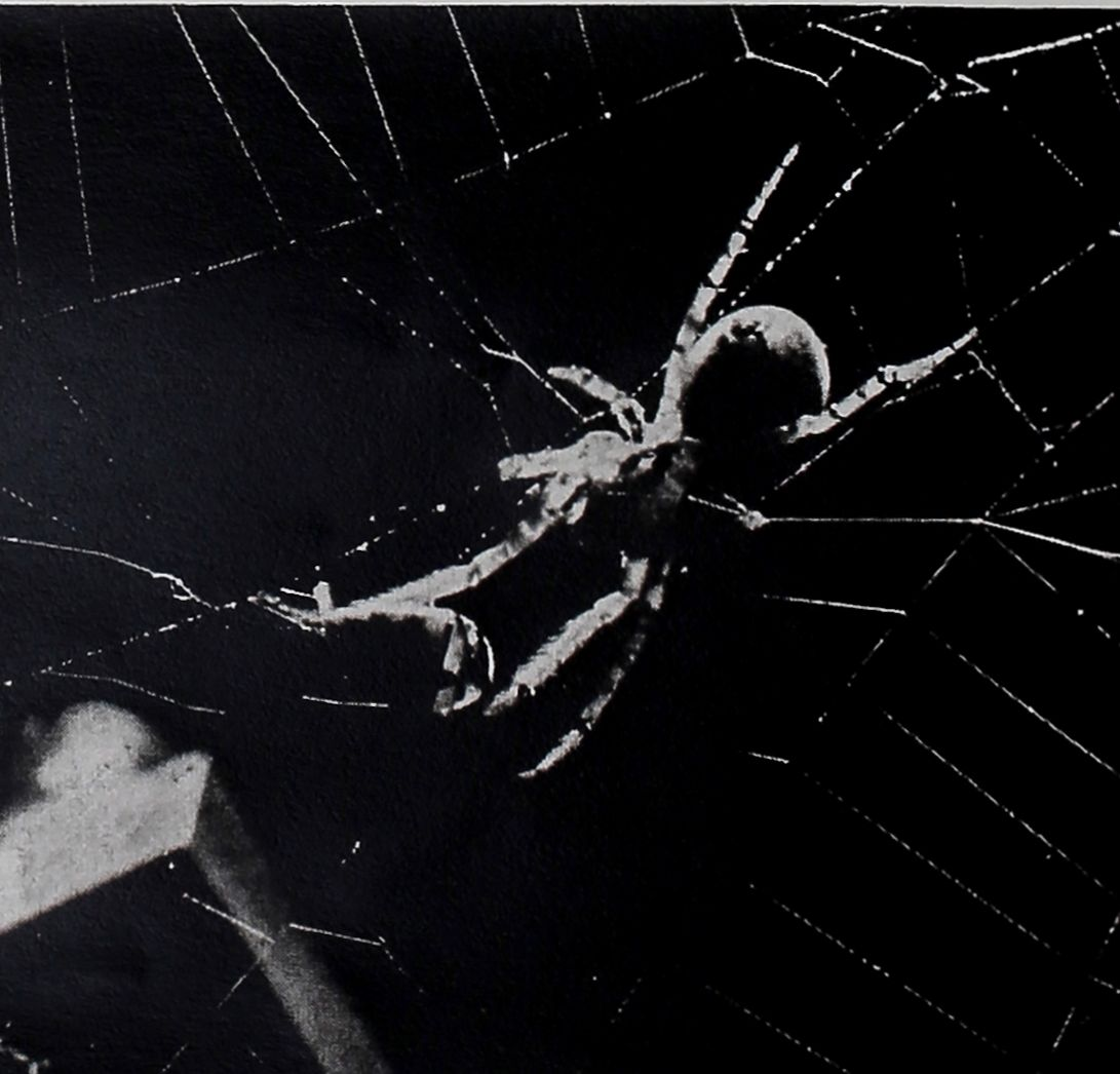 1954-LIFE-Spiders-Spin-8