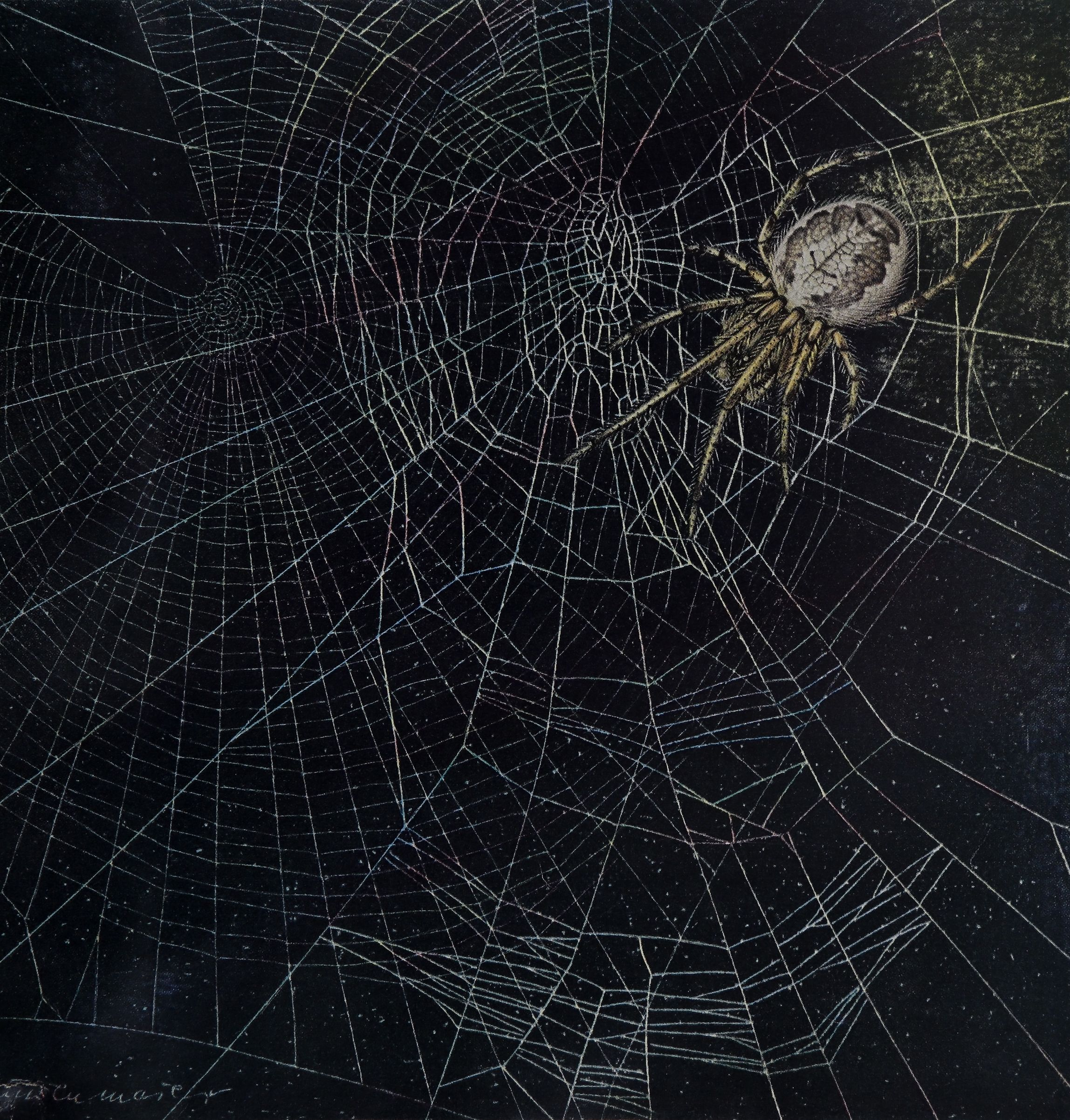 Spider Webs and Drugs <br><strong>Scientific American</strong>