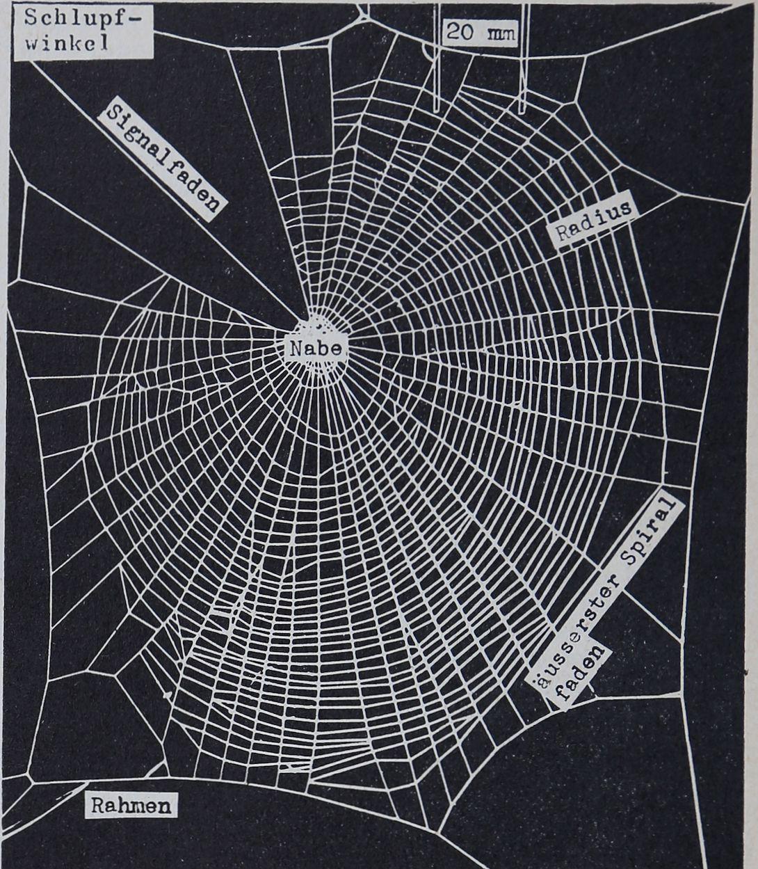 1956-Der-Netzbau-1