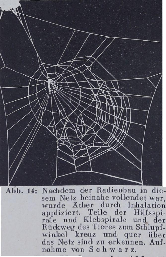1956-Der-Netzbau-14