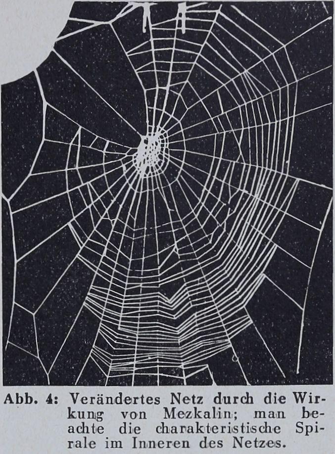 1956-Der-Netzbau-4