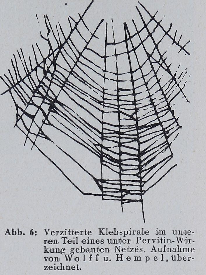 1956-Der-Netzbau-6