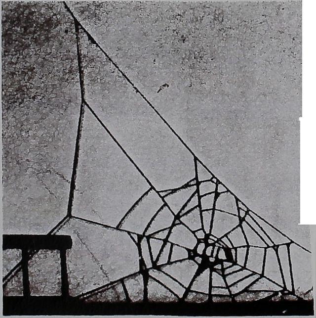 1957-Spider-Web-Reveals-4
