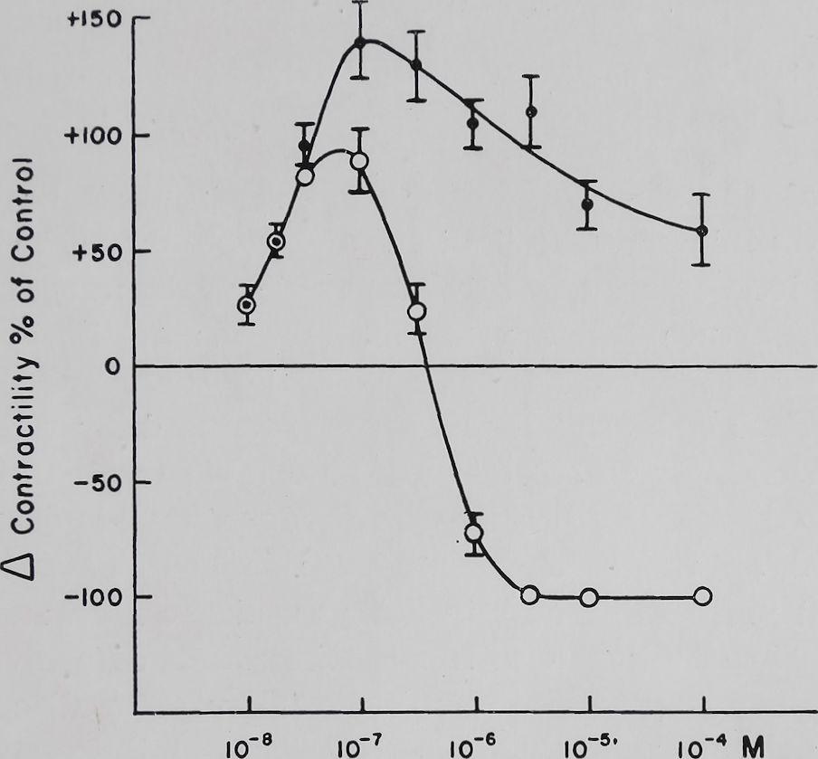 1963-CardiacGlycosidesAndCalcium-1