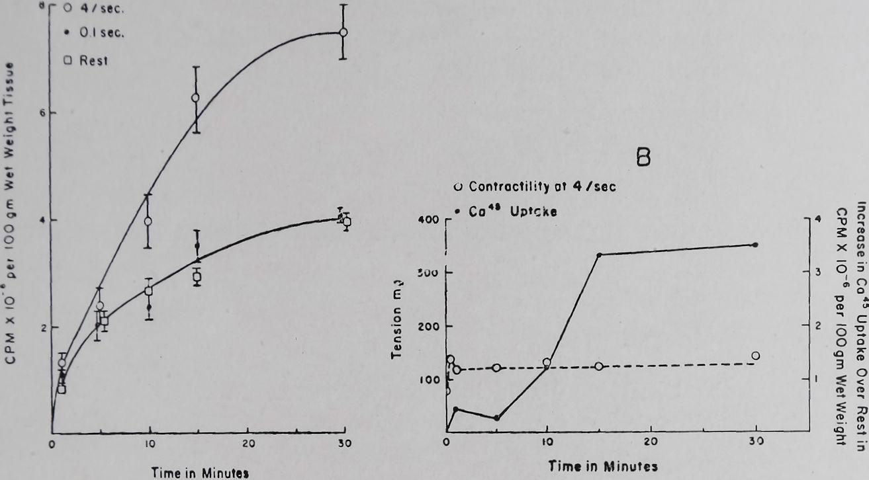 1963-CardiacGlycosidesAndCalcium-3