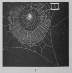 THE FATE OF THE INTACT ORB WEB OF THE SPIDER…<br><strong>Reprinted from: BEHAVIOUR</strong>