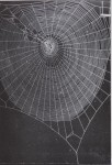 Progressive Disturbance of Spider Web Geometry&#8230;<br><strong>PHYSIOLOGY &#038; BEHAVIOR</strong>