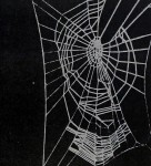 The Spider&#8217;s Web &#8211; Research Tool<br><strong>Senior Science</strong>