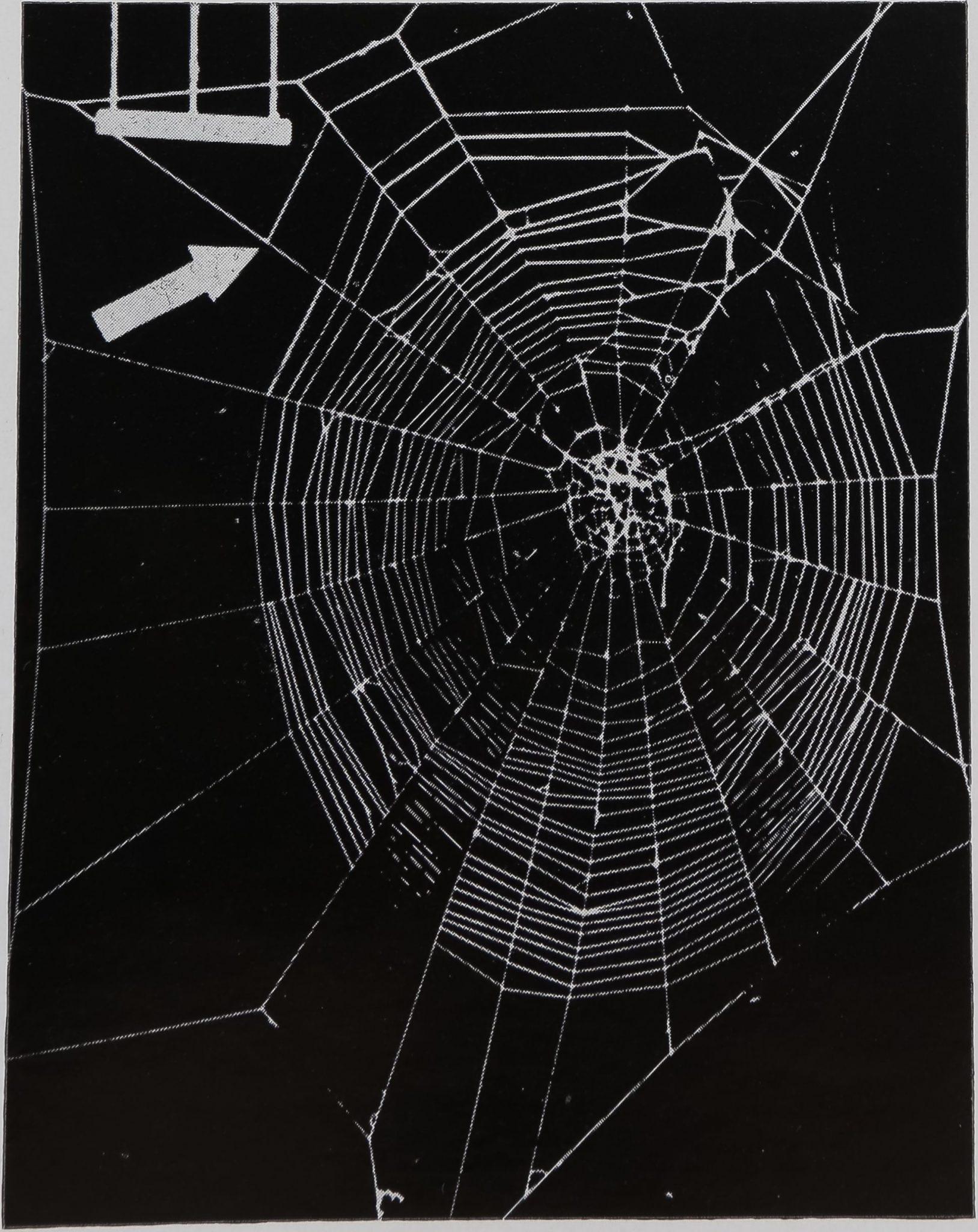 1970-AnimalBehaviourOrbWeb-6