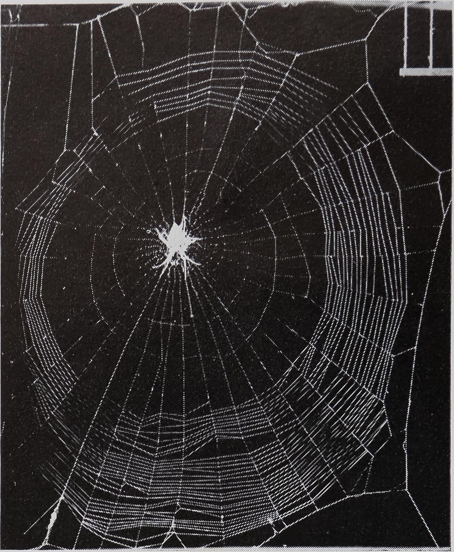 1971-BehavioralScienceTheBiology-5