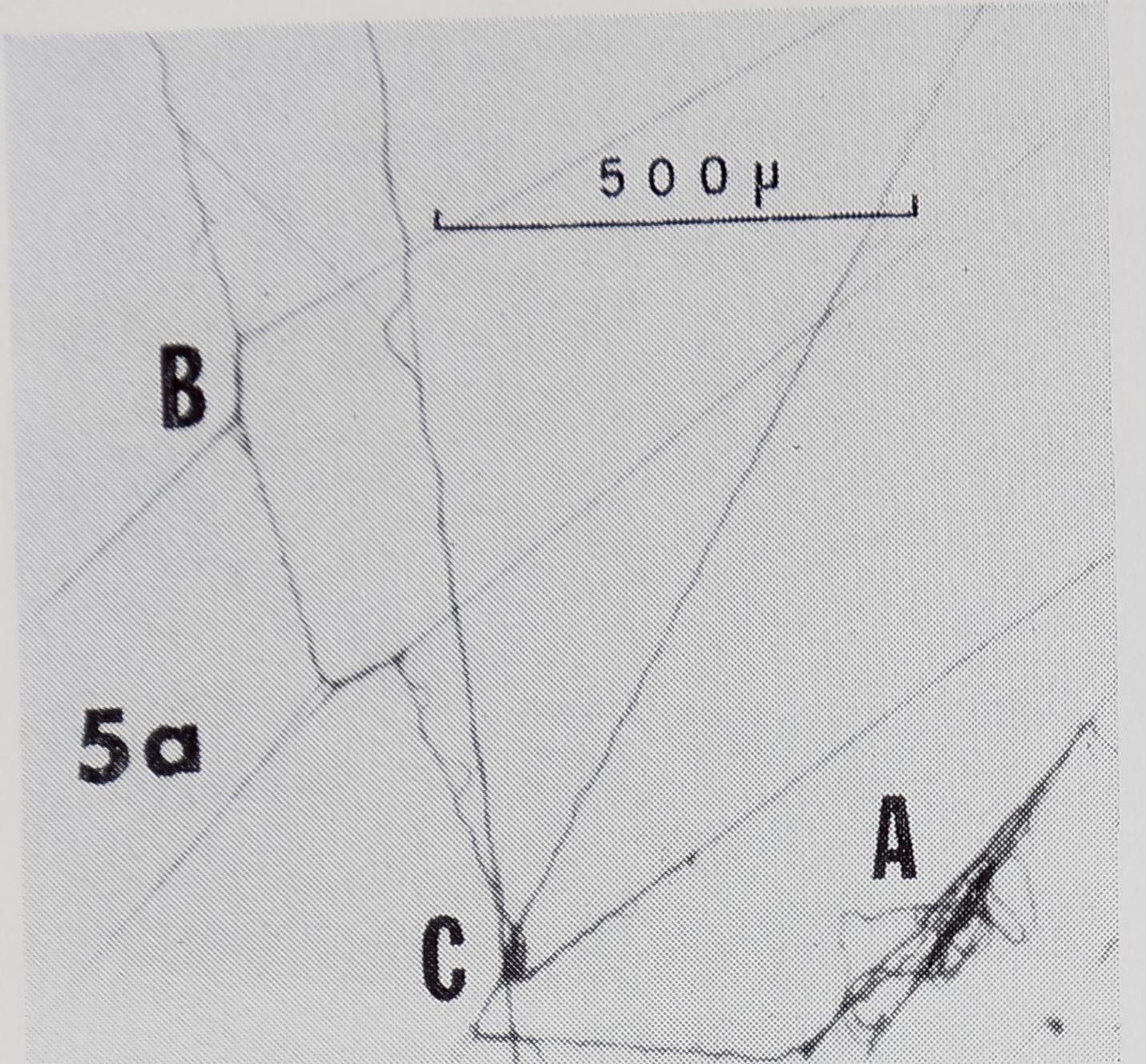 1971-FineStructureOfTheThread-10