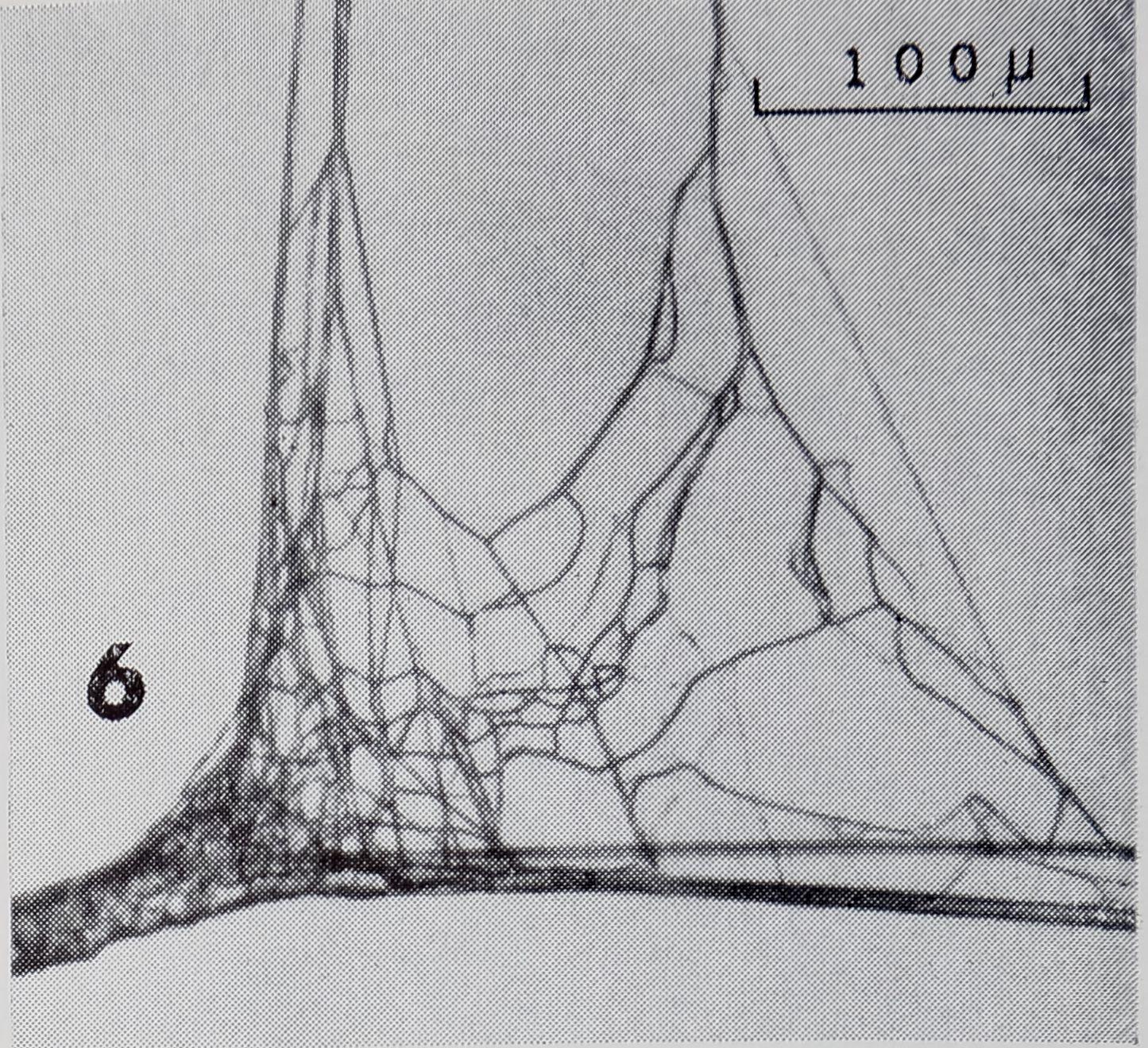1971-FineStructureOfTheThread-11