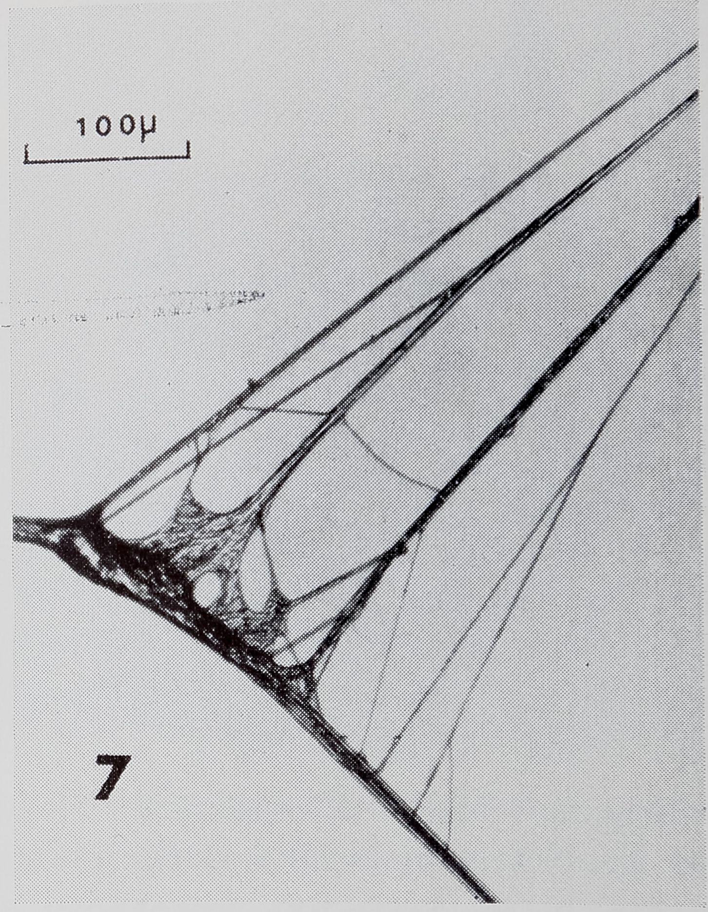 1971-FineStructureOfTheThread-13