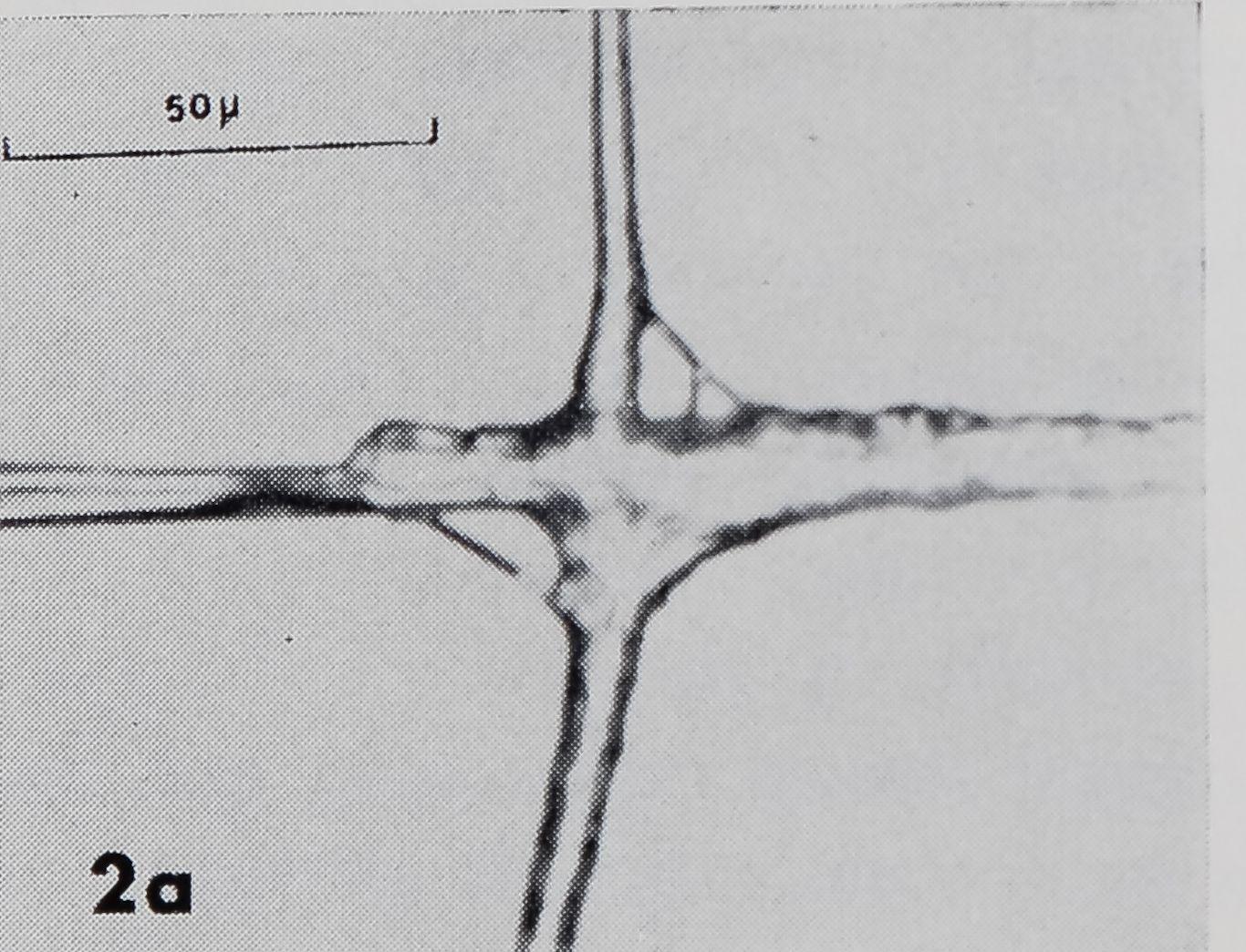 1971-FineStructureOfTheThread-2