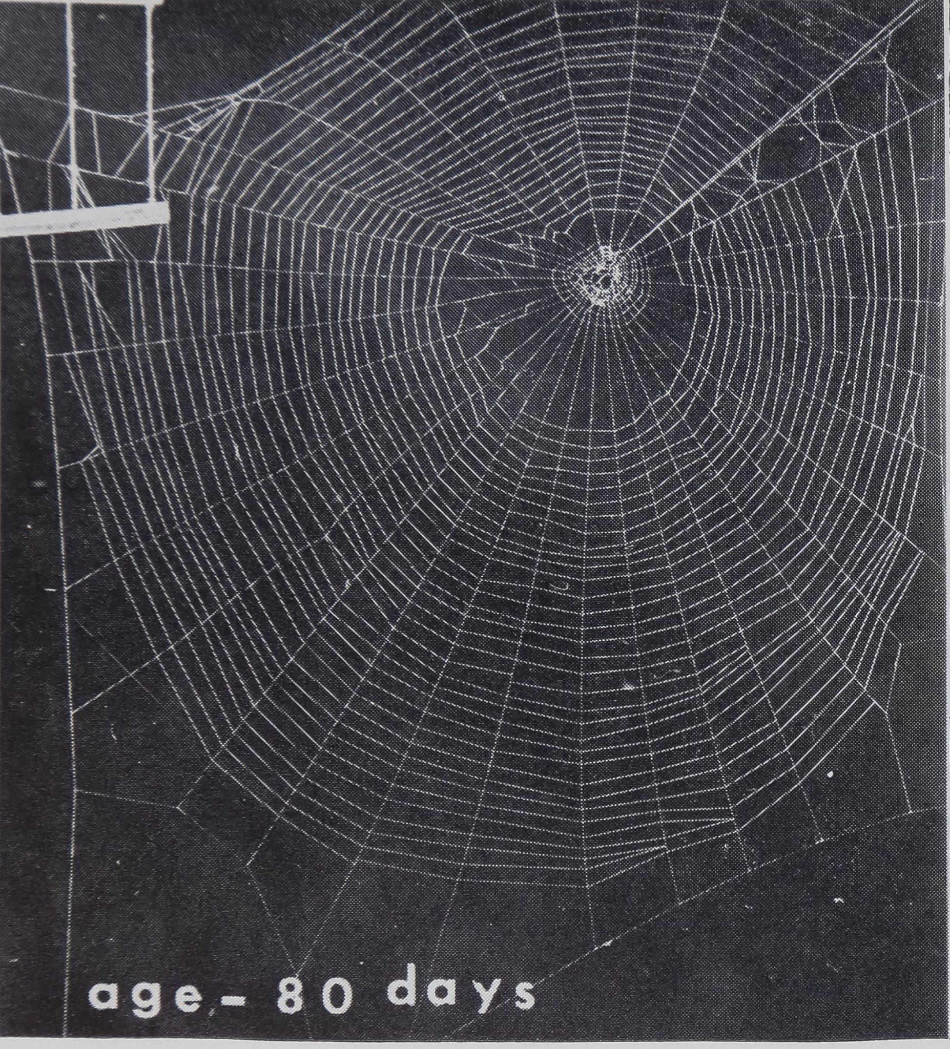 1973-BodyWebBuildingAnd-8