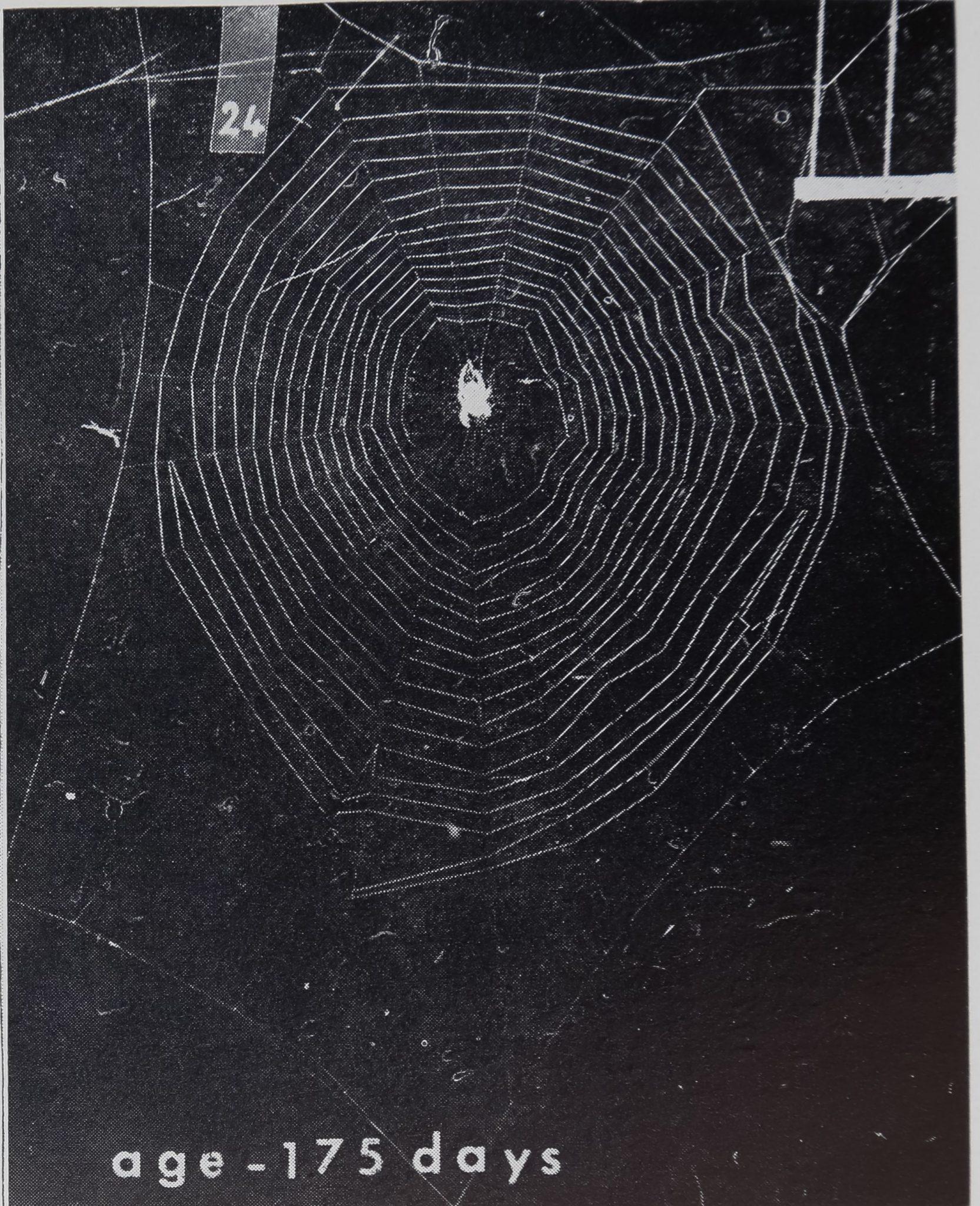 1973-BodyWebBuildingAnd-9