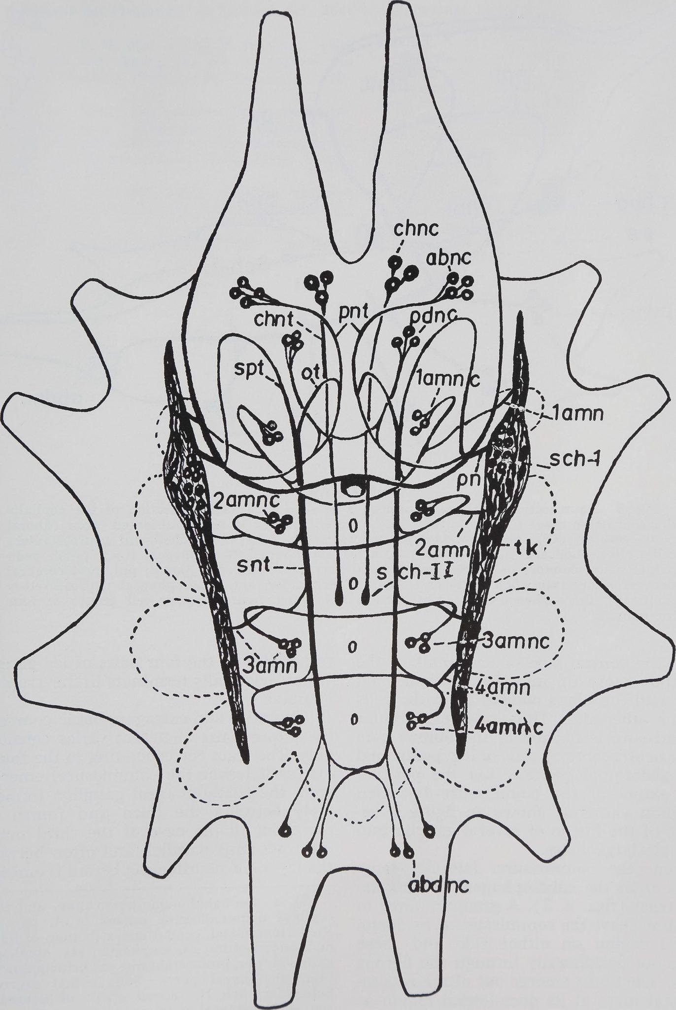 1973-HistoryOfTheNeurosecretory-2