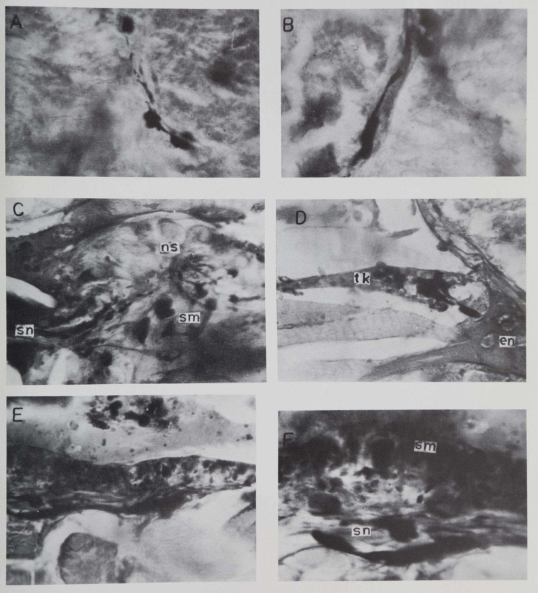 1973-HistoryOfTheNeurosecretory-8