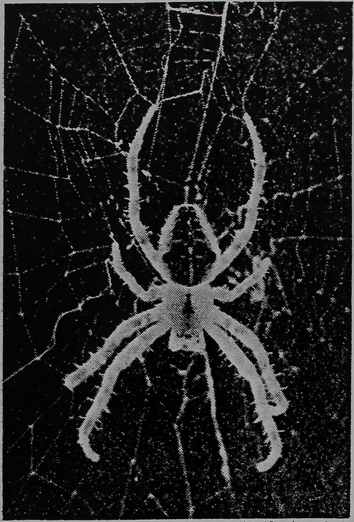 1973-Spiders-Help-Men-1