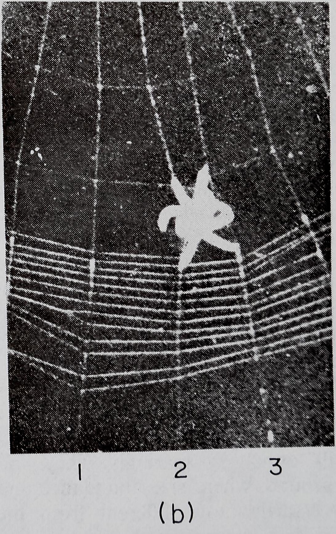1975-TheEnergyBudgetOfAn-3