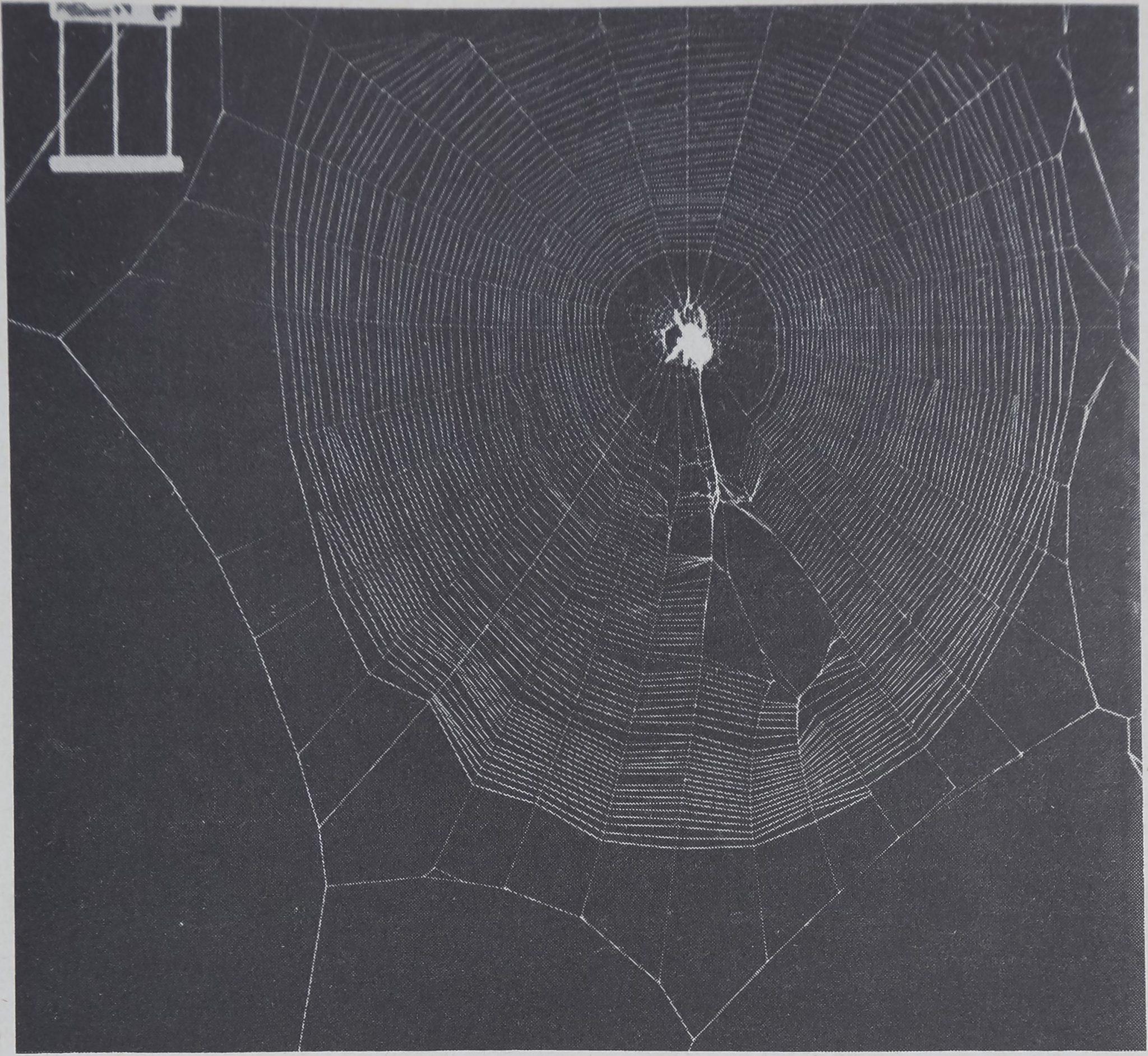 1975-TheWebAsMeansOfCommunication-4