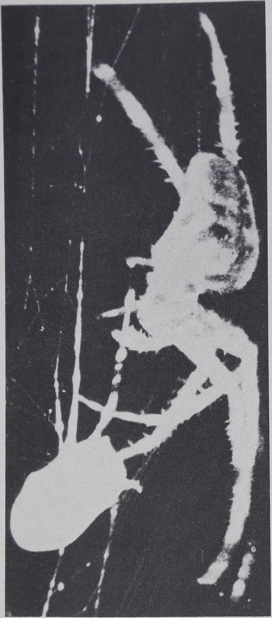1975-TheWebAsMeansOfCommunication-5