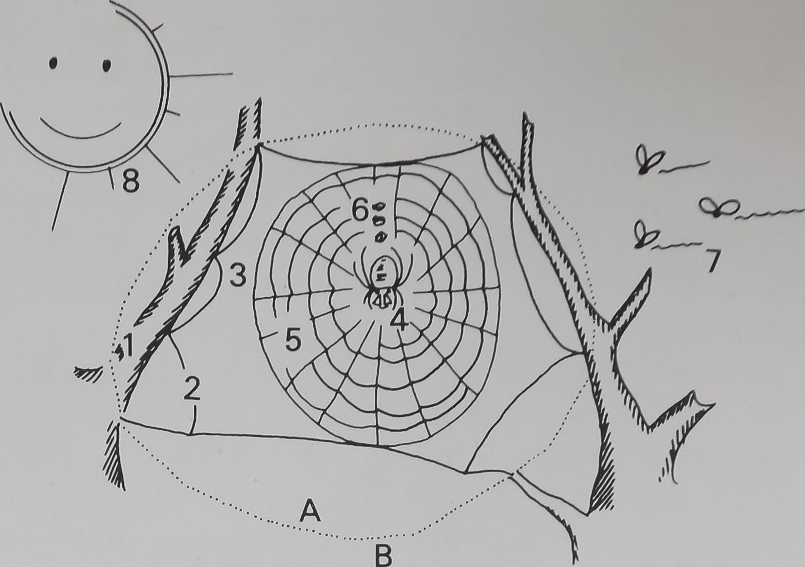1976-SpiderWebsDesign-5
