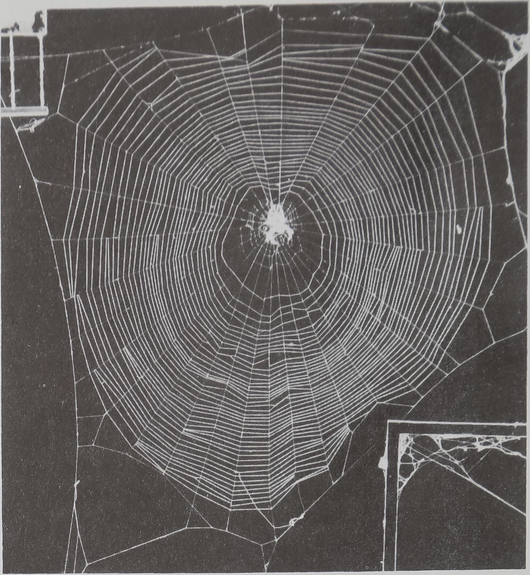 1976-SpiderWebsDesign-6