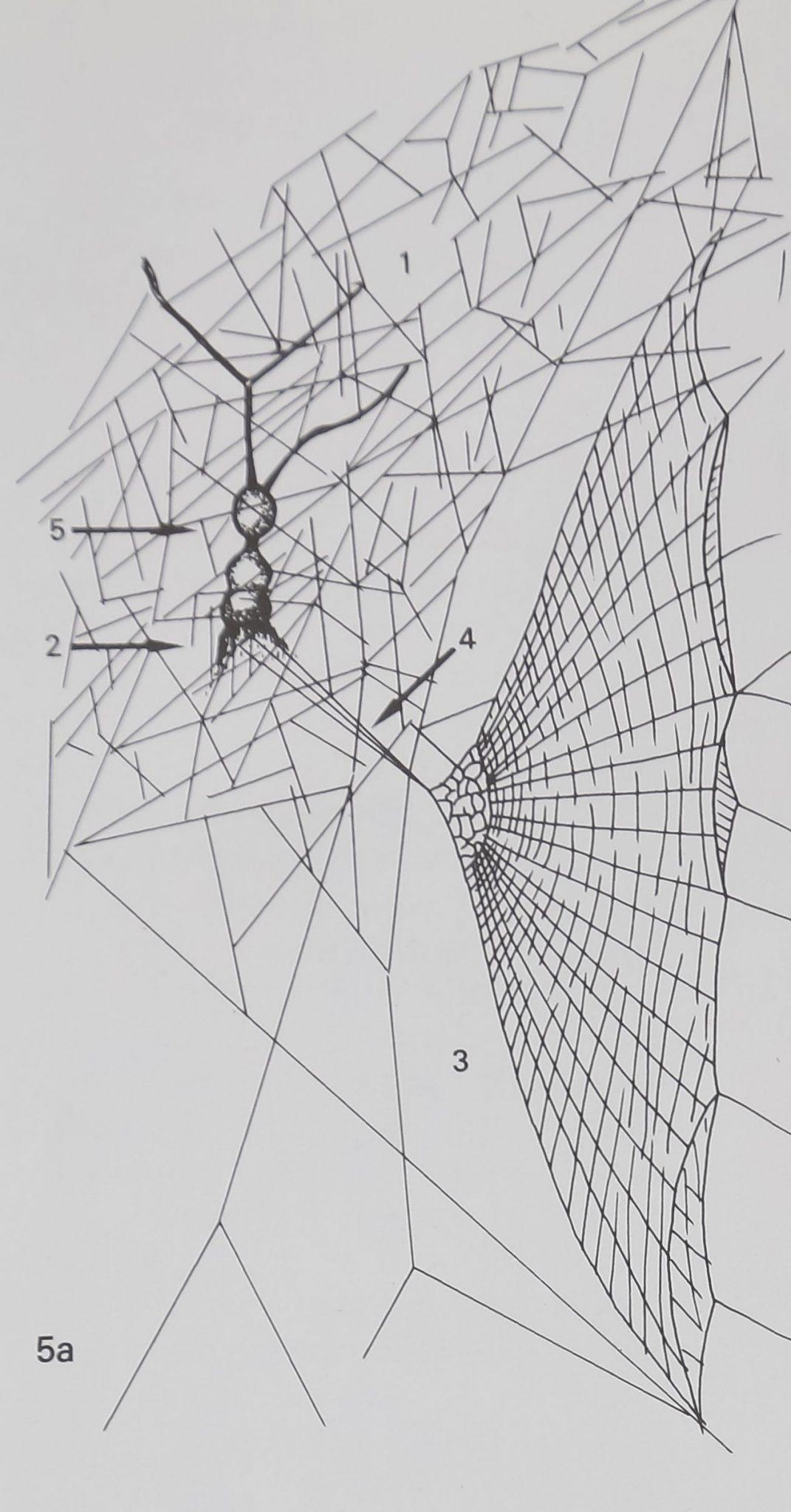 1976-SpiderWebsDesign-8