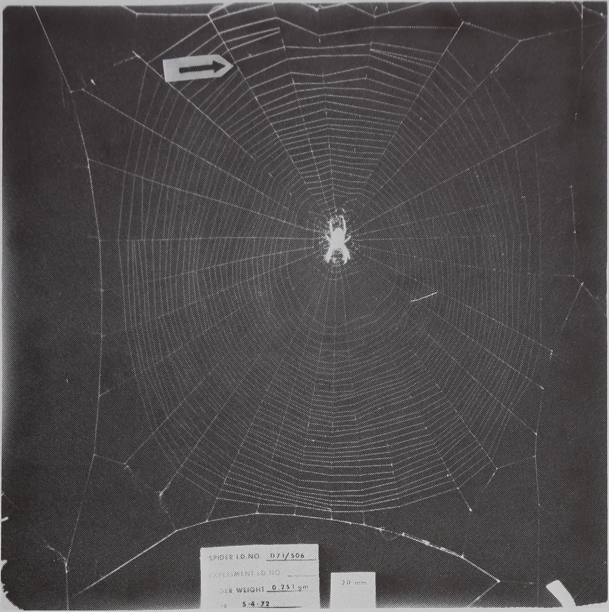 1977-SpiderWebBuilding-1