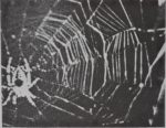 SPIDER WEB-BUILDING IN OUTER SPACE<br><strong>NC Department of Mental Health</strong>
