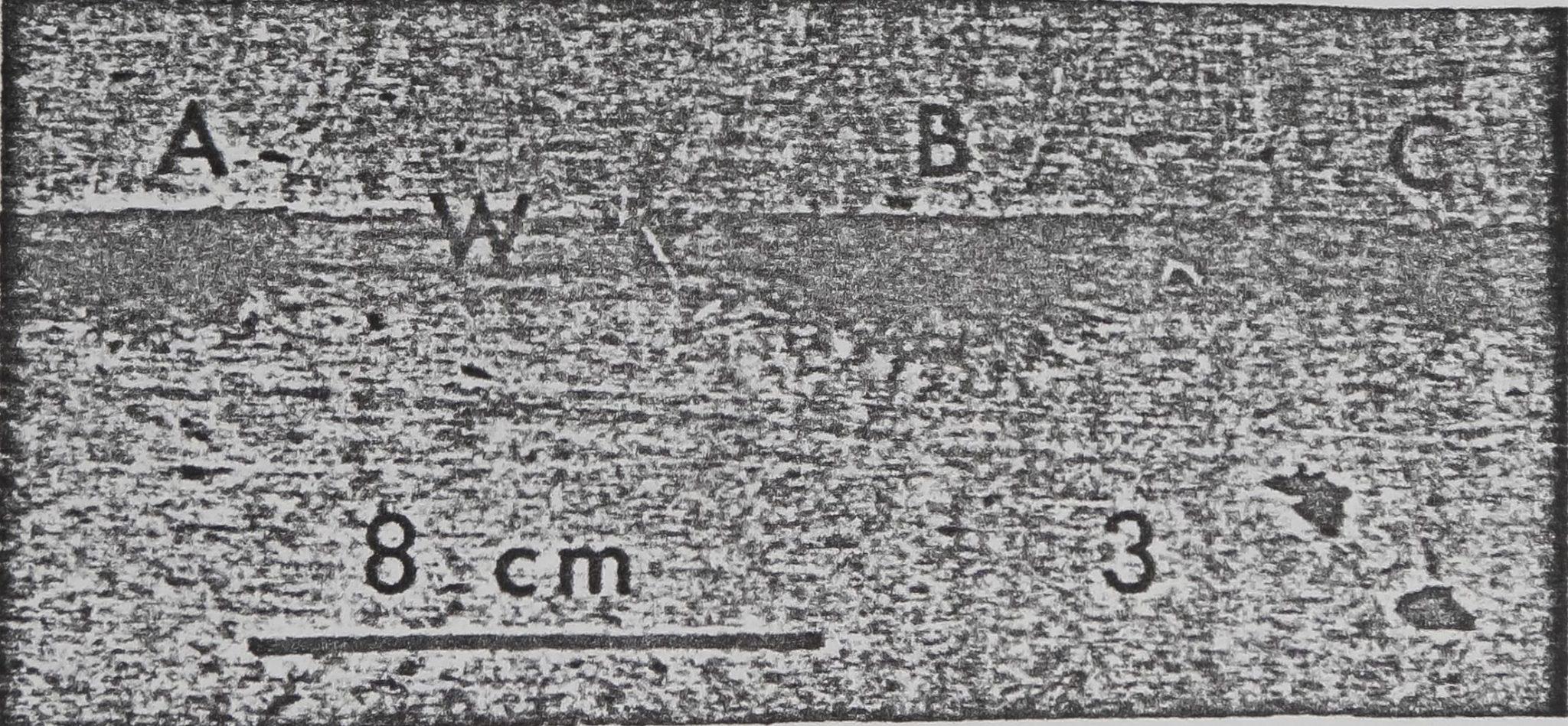 1978-ComparativeStudiesOfDictyna-3