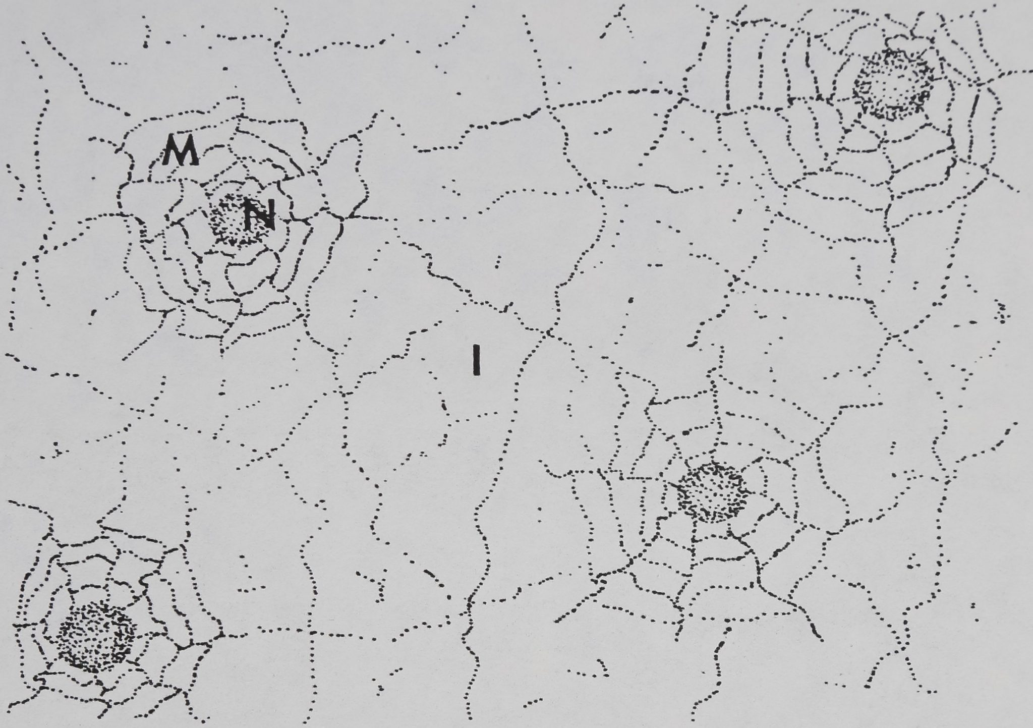 1978-ComparativeStudiesOfDictyna-4